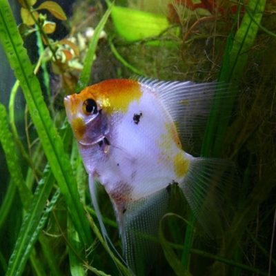 Buy Aquarium Fish Online India Call 91 8053331722 Www Petshomey